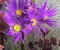 October 2016 - Overwintering plants