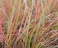 September 2016 - Ornamental grasses