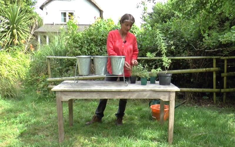 Planting a Herbal Tea Garden