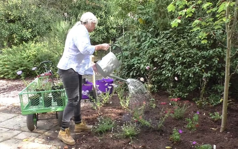 How to plant a herbaceous border
