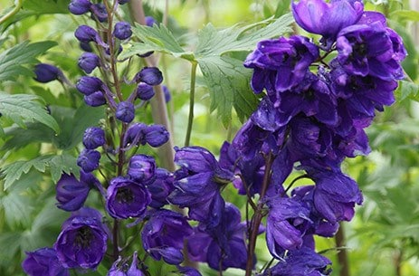 The Purple Delphinium Collection