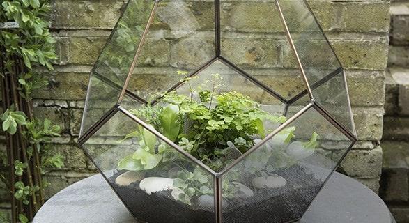 Terrarium & starter ferns