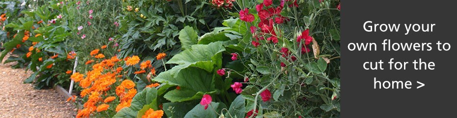 Grow your own flowers to cut for the home