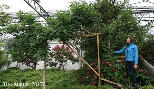 Chelsea Garden Inspiration