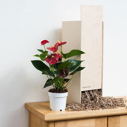 Gift boxed plants