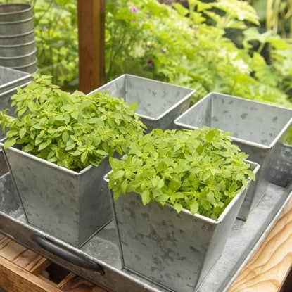 Garden without plastics