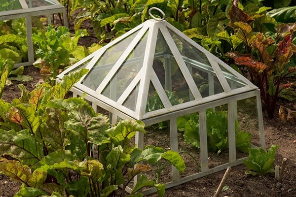 Glass cloches & grow houses