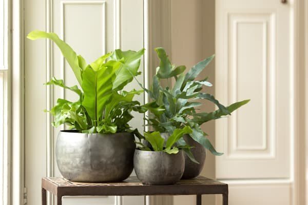 Indoor pots & accessories