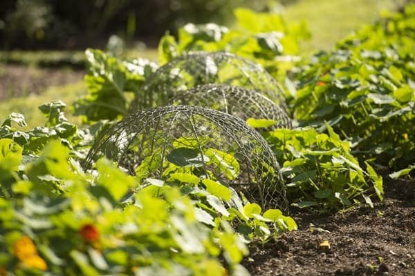 Protective wire cloches