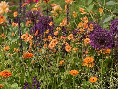 Your Border, Good to Great: Planning, Planting and Plant Maintenance