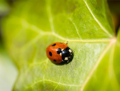 Join a bug hunt in our walled garden