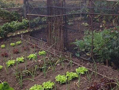 Organic fruit and vegetable gardening for beginners