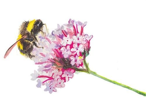 Bees & neonictinoides