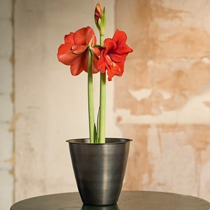 Indoor plant gifts