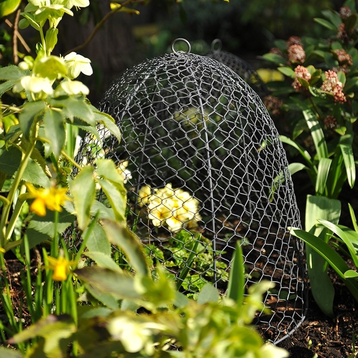 Protect your latest plantings