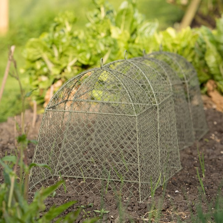Protect plants with cloches