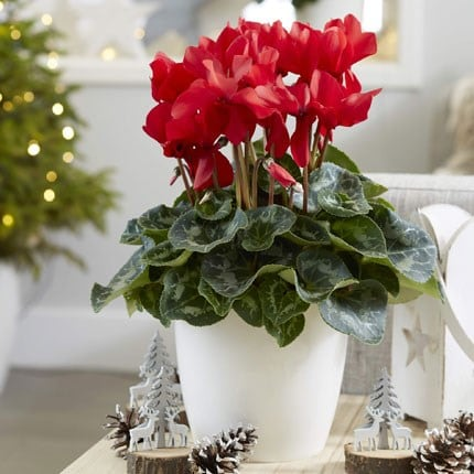 Gifts that will grow
