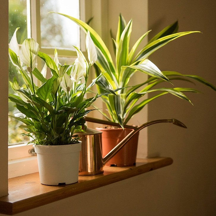 Add indoor greenery to increase the feel-good factor
