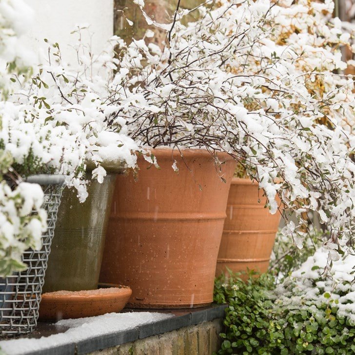 Protect plants from cold weather