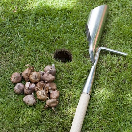 Bulb planting kit
