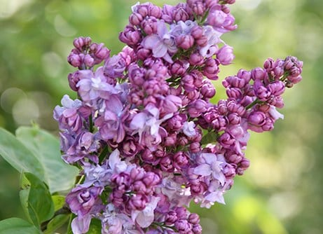 Border of the month - Scented garden