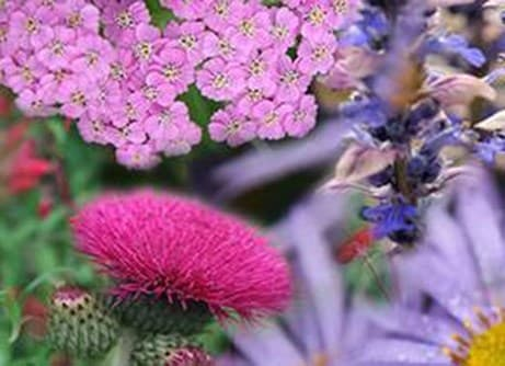 Border of the month - flowers for pollinators