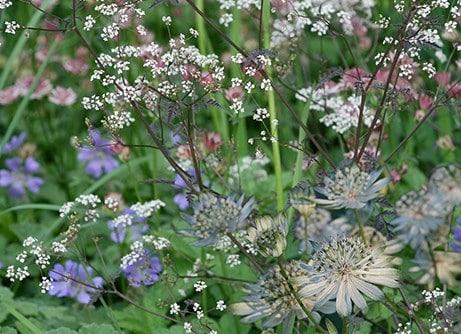 Border of the month -  Planting the woodland edge