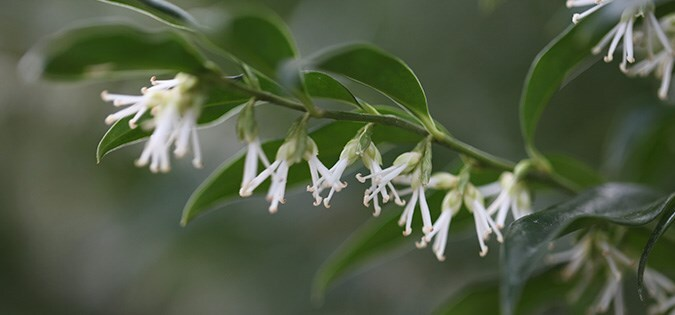 Plants for winter scent