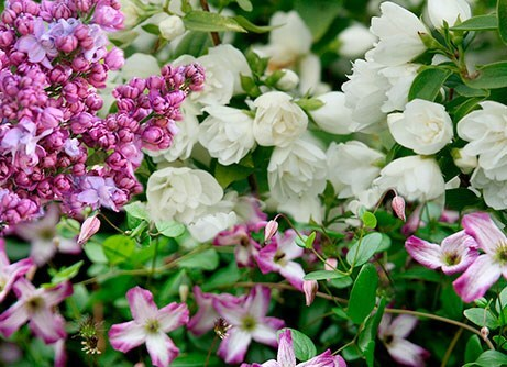 Border of the month - Scented