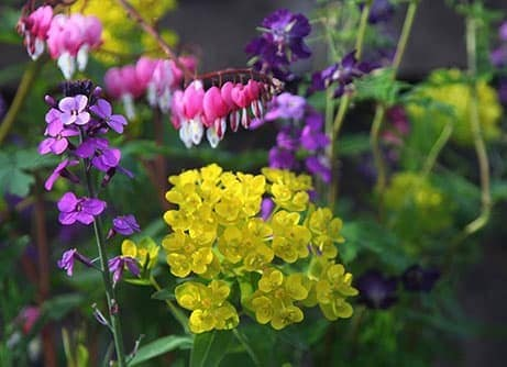 Border of the month - Early colour