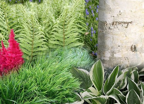 Border of the month - Woodland