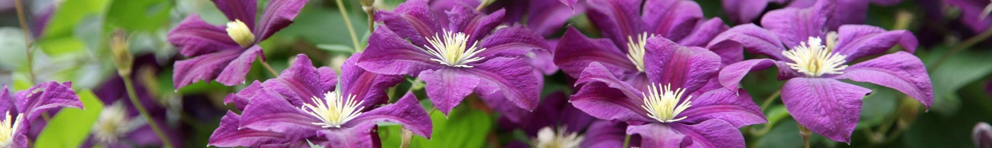 Scented plants for every season