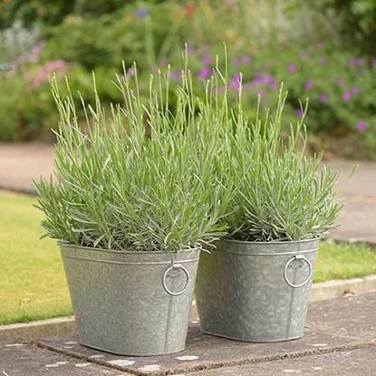 Plant & pot combinations