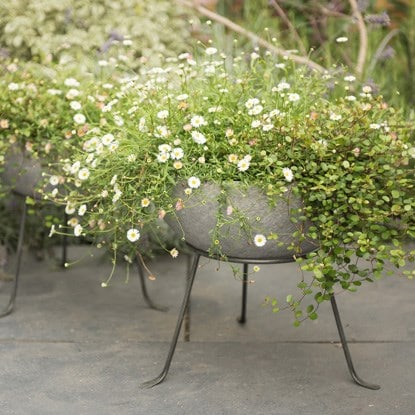 feature pots - Garden Pots