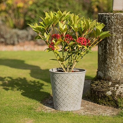 Feature pots
