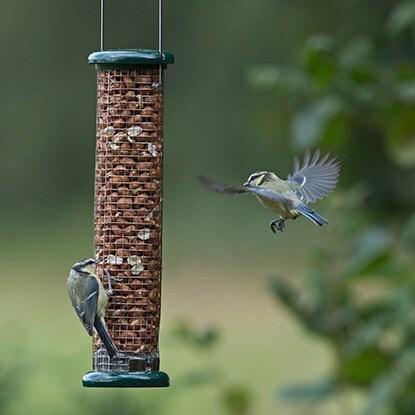 Birdcare & wildlife