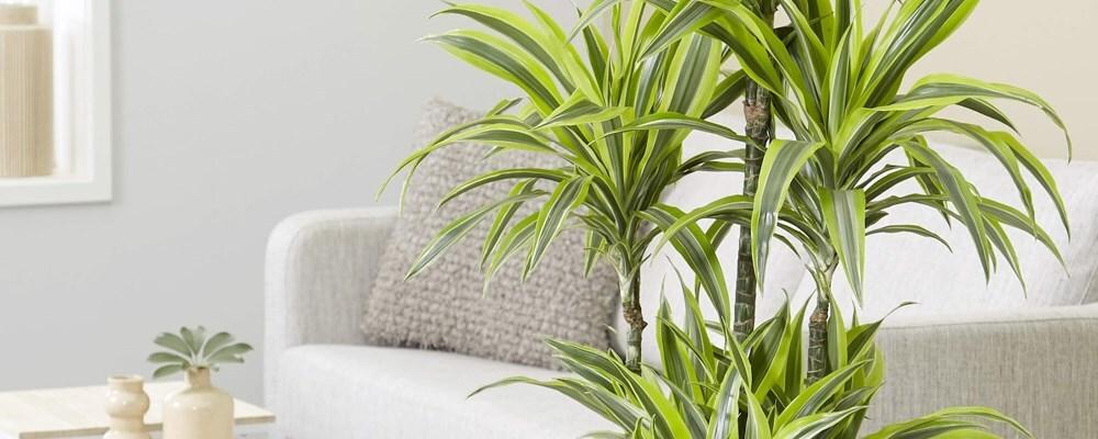 Selected house plants