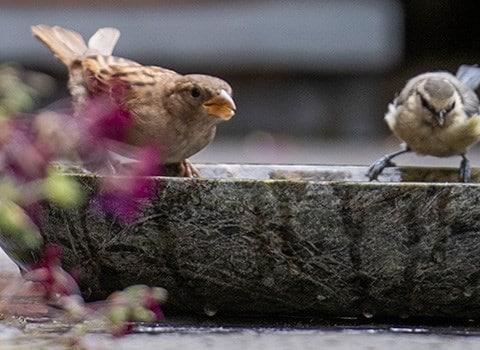 15% OFF all bird care & wildlife