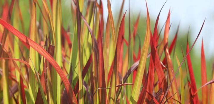 Bamboos, ferns & grasses