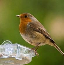 WINTER BIRDCARE