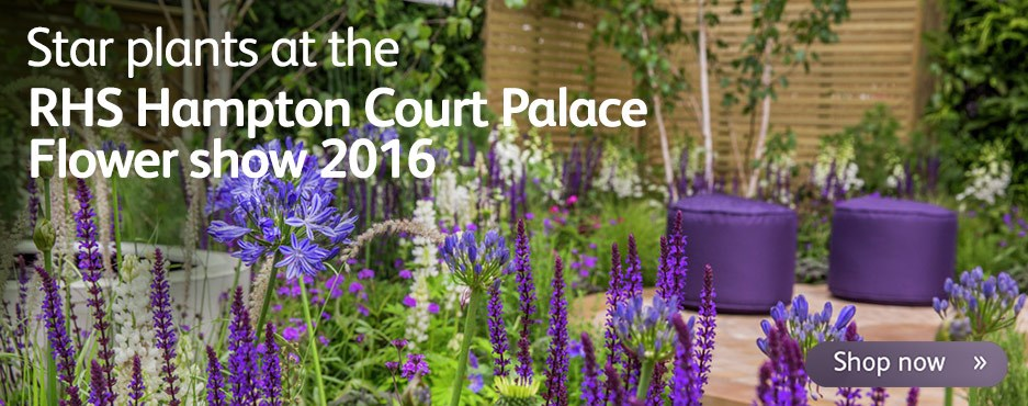 Star plants at the RHS Hampton Court Palace Show 2016