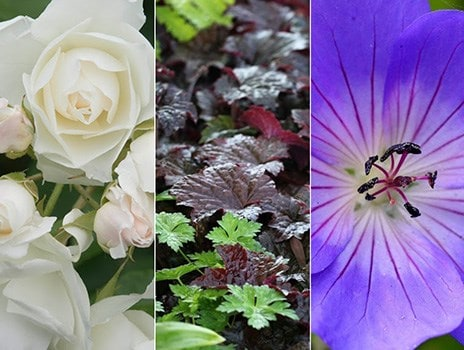Chelsea Flower Show brings out the best and worst in us gardeners