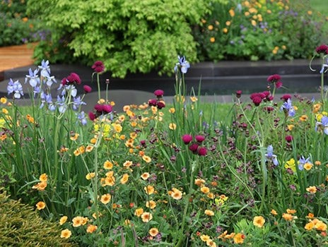 What to expect from the RHS Chelsea Flower Show