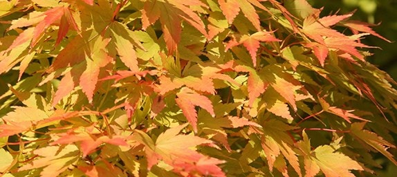 Autumn foliage shades