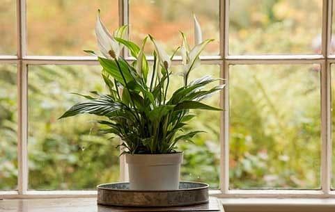 house plants save