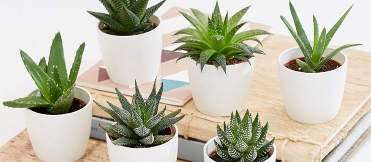 Plants perfect for the bedroom