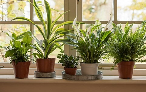 Shop all indoor plants