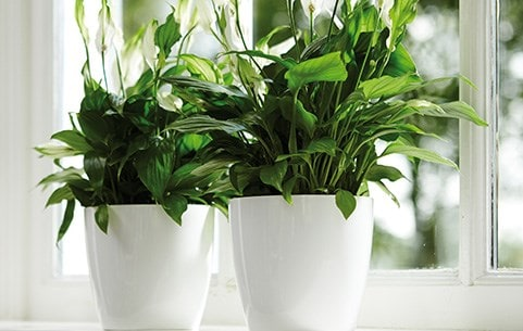 Indoor Plants,New York Times Travel Ban To Europe