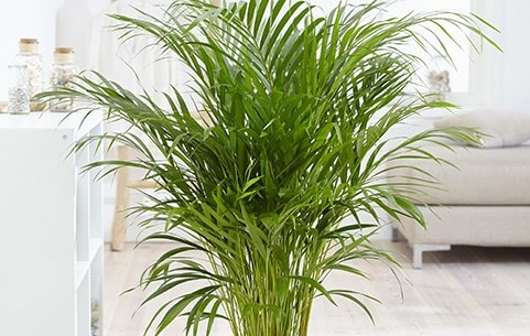 Specimen house plants