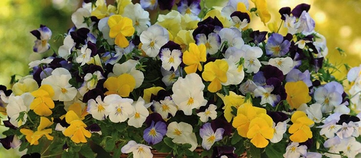 Selected bedding plants